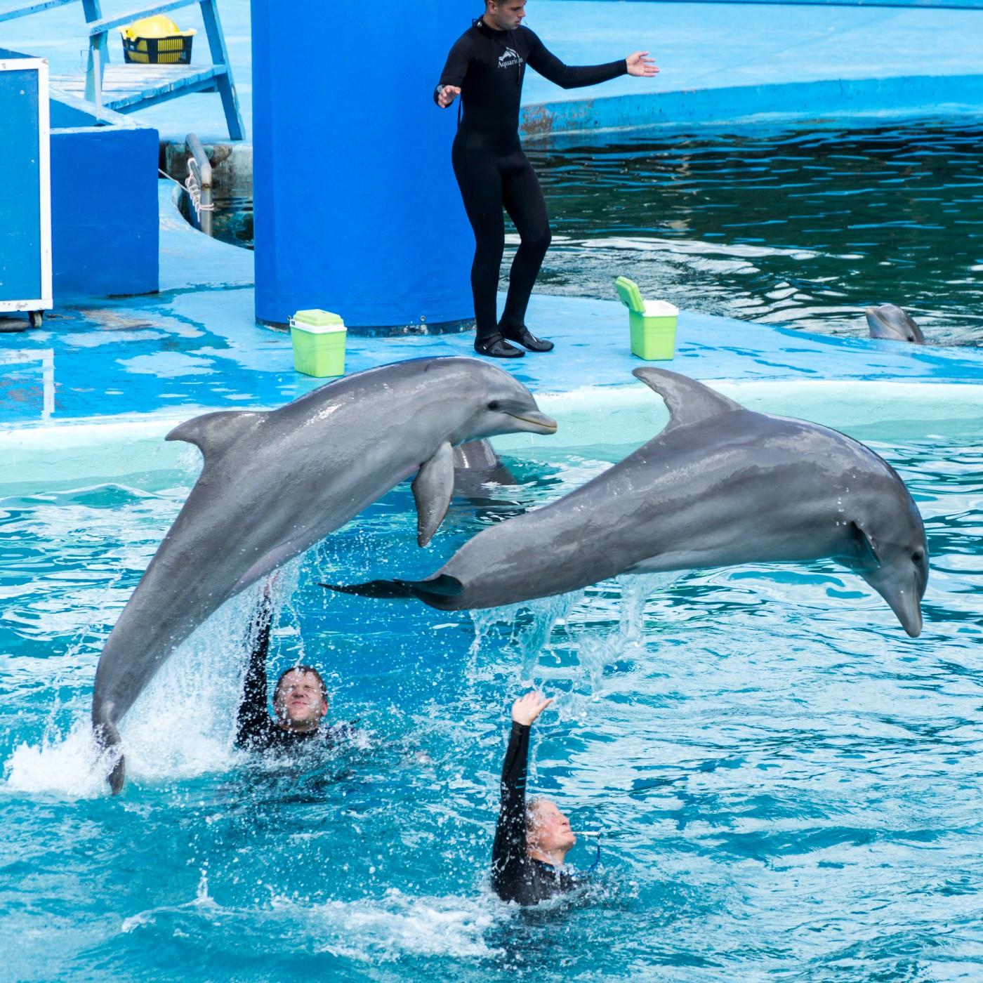 dolphinling.net